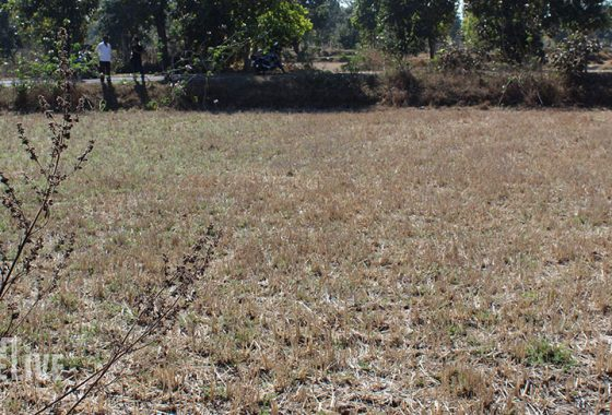 2 ACRE AGRICULTURAL LAND FOR SALE GONDIA AMGAON ROAD TANDA