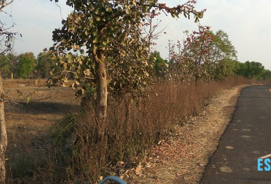 3 ACRE AGRICULTURAL LAND FOR SALE NEAR SHIVNI ROAD UMRI GONDIA